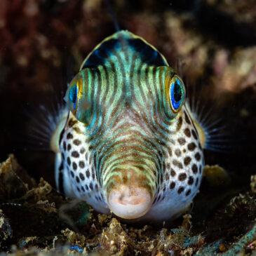 Il riposo nel reef… Un sogno ad occhi aperti