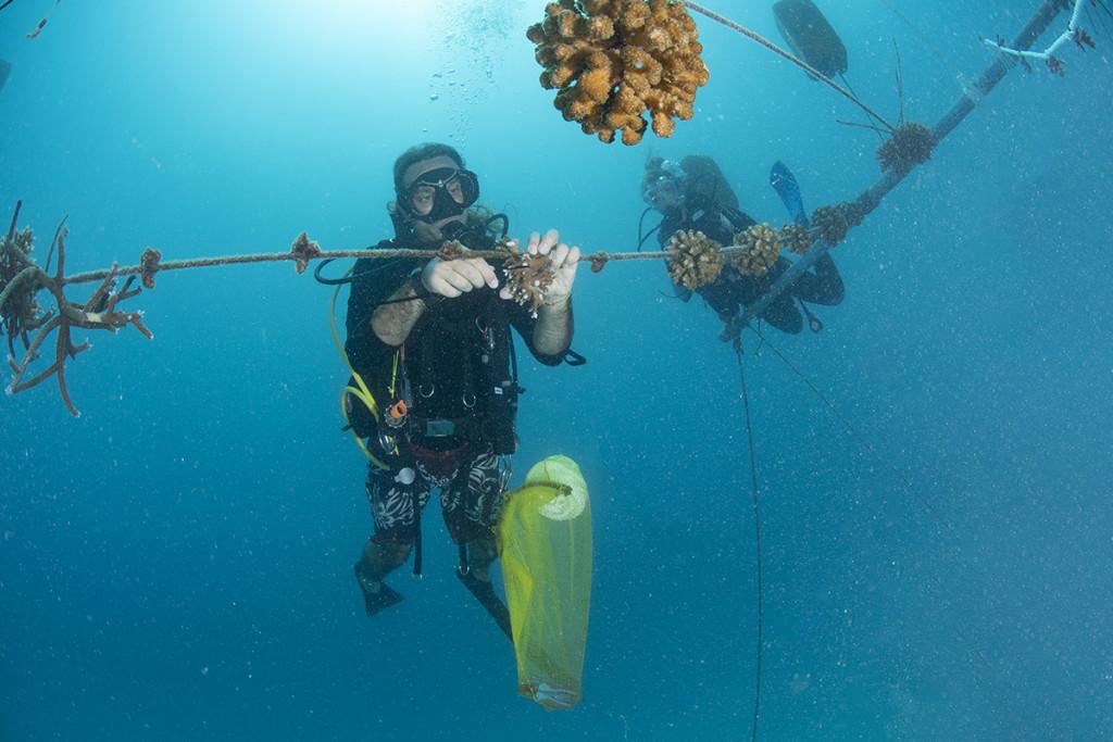 coralli alle maldive