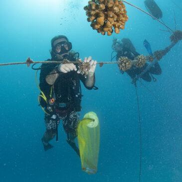 Fantastiche notizie per i coralli delle Maldive