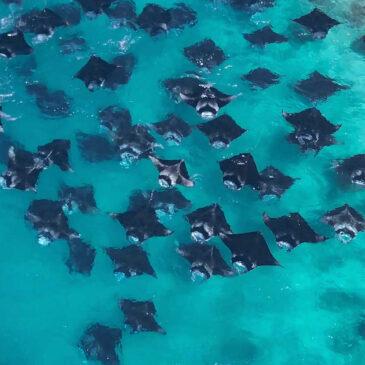 Hanifaru Bay, Maldive