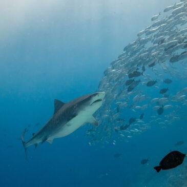 Le Maldive, paradiso incontaminato