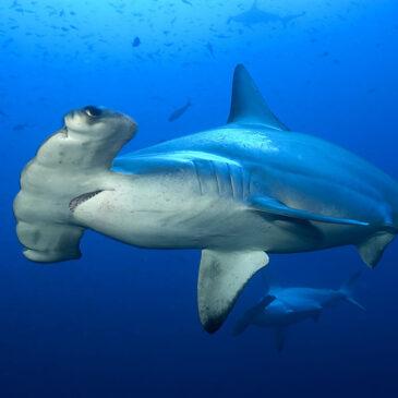 Emozioni forti sott'acqua? Belongas Bay