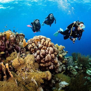 Aqua Lung partner di Ocean Film Festival Italia 2020