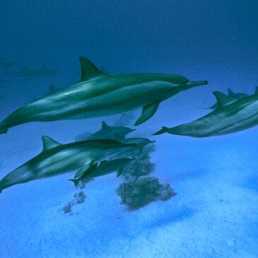 Il Dolphin reef di Eilat in Israele. Globalmente unico