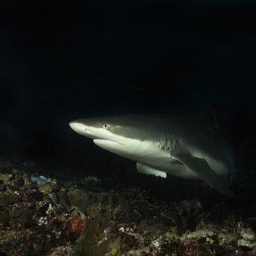 """Storie di incontri inaspettati. """"The shark in the dark"""""""