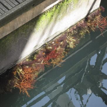 La Biodiversità dove meno te l'aspetti: uno sguardo nel Porto Antico di Genova