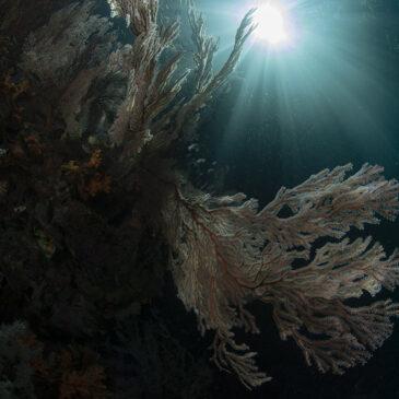 La mia immersione preferita