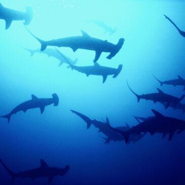 Quali sono le migliori immersioni al mondo?