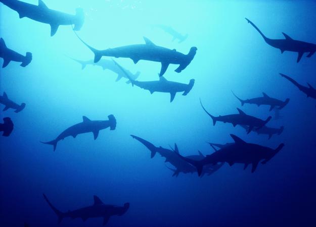 immersioni migliori al mondo
