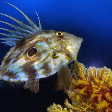 Scilla, la più bella sott'acqua
