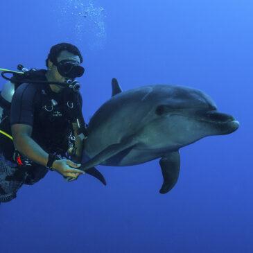 Polinesia, sognare si può