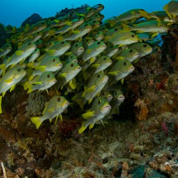 Quali sono le migliori immersioni al mondo? Parte II