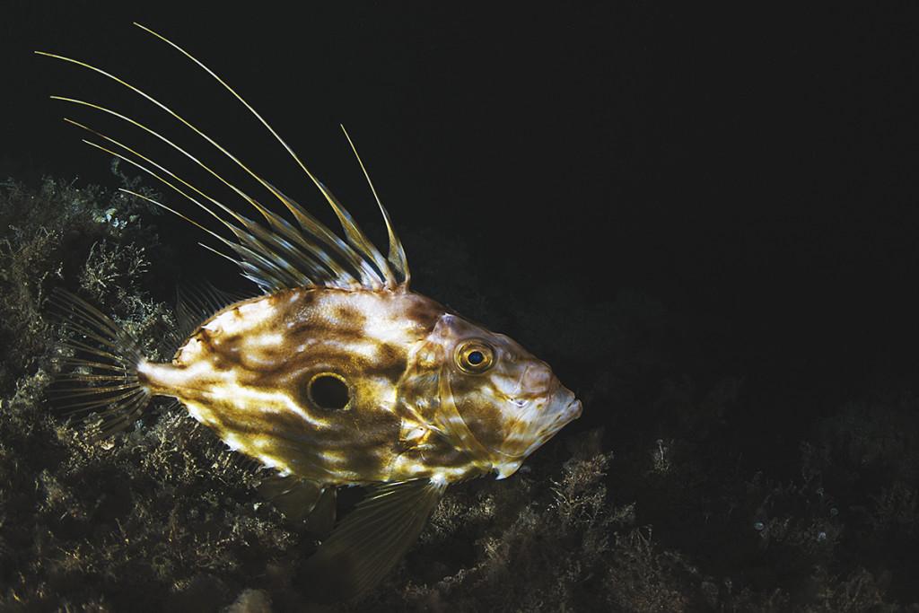 scubazone 56