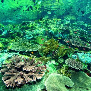 Effetti collaterali: ma cos'è 'sta Biodiversità?