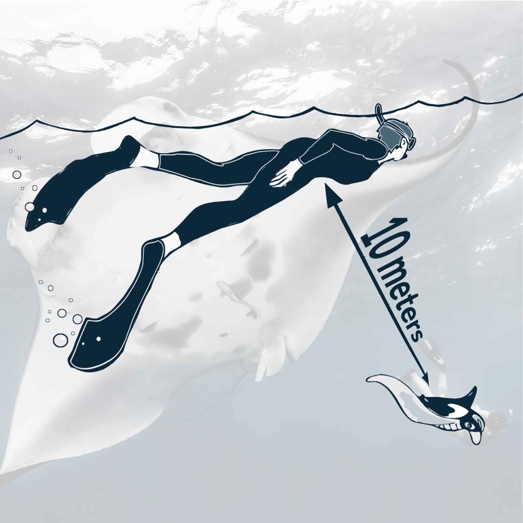 Manta Trust_Swim with Mantas_10m image